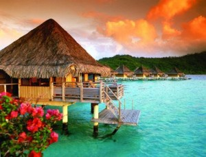 paradise my road to financial freedom